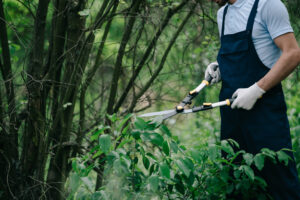Why is Tree Trimming Important?